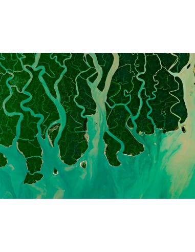 Delta tentaculaire au Bangladesh
